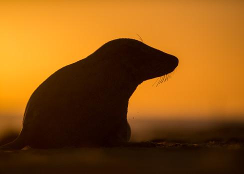 Silhouette by Josh Jaggard