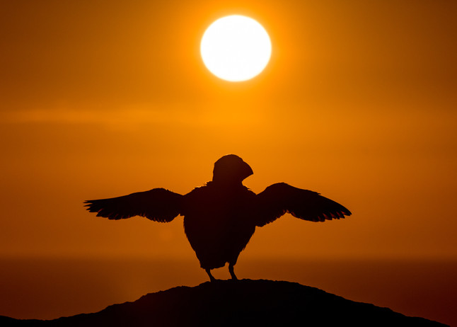 Flapping into the sunset by Josh Jaggard