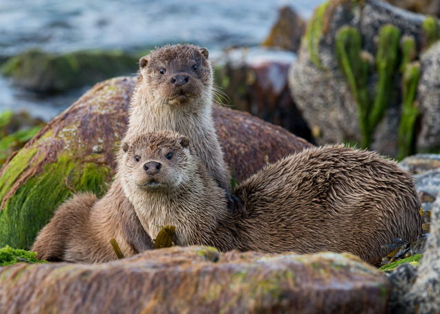 Mum and cub on the shore By Josh Jaggard