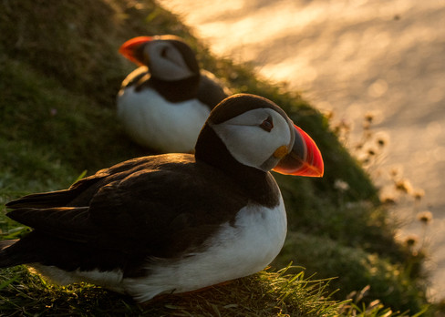 Backlit duo By Josh Jaggard