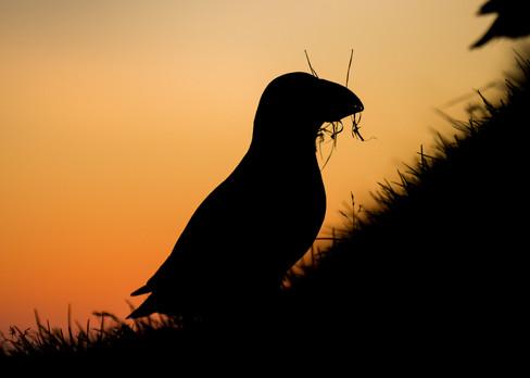 Nesting silhouette by Josh Jaggard