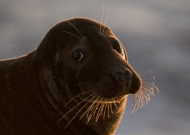 Whiskers by Josh Jaggard