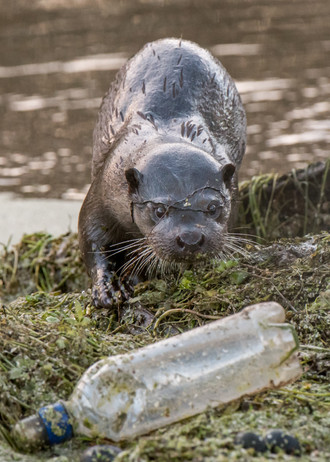 Otter bottle By Josh Jaggard