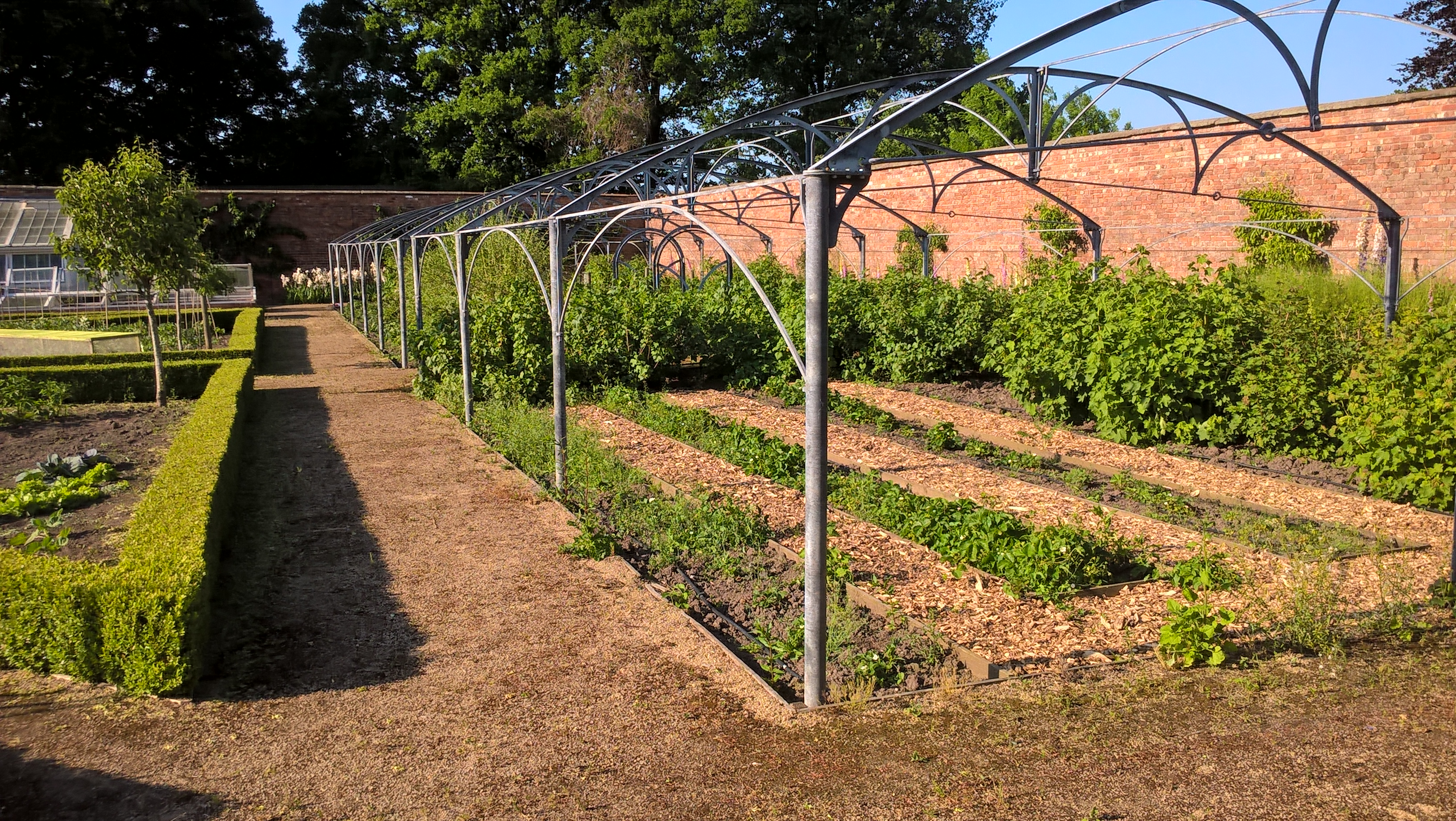 Poole hall fruit cage 17