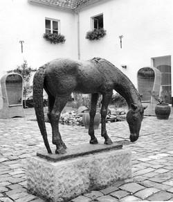 VP56 Drinkend paard