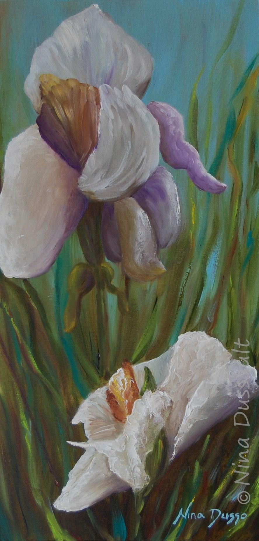 Iris blanc en beauté