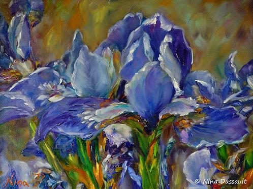 La gloire des Iris