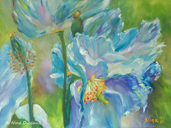 Somptueux pavots bleus