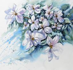 Fleurs de pommier, 13 x 13 $200