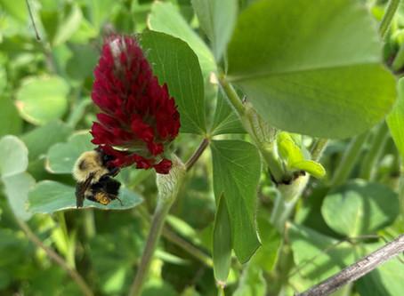 National Pollinator Week June 22-28