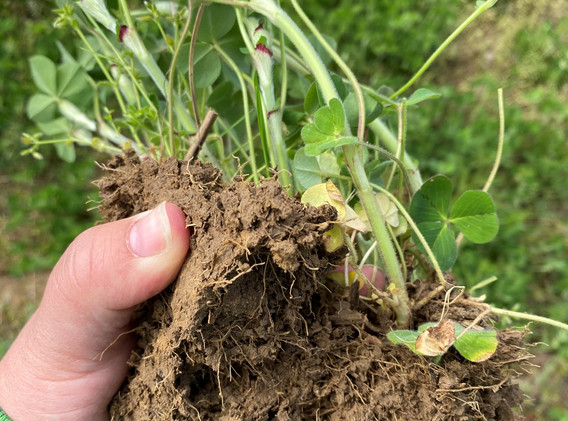 Soil%20and%20Roots%20in%20Cover%20Crop%2