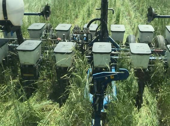 May 30 2020 Planting Green.JPG