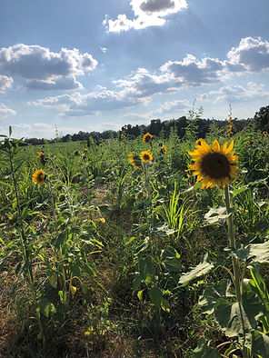 Multi Species Cover Crop mix_featuring s