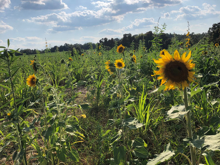 New State Record Set for Cover Crops