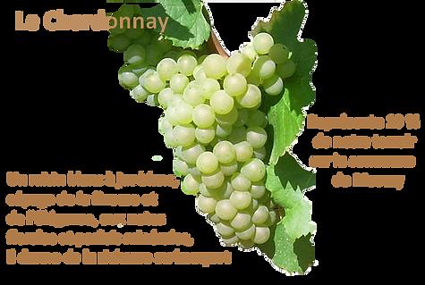 grappe de raisin chardonnay