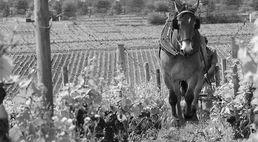 L'Histoire du Champagne Grasset Stern