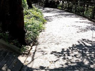 [10・11月開催] バレエレッスン(オープンクラス)