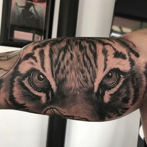 good tiger.jpg