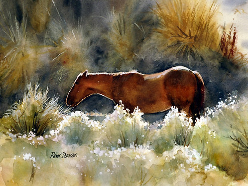 "Horse in sun -Retreat  14"" x 11"""