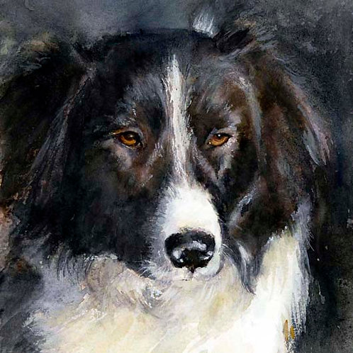 "Collie Portrait  8"" x 10"""