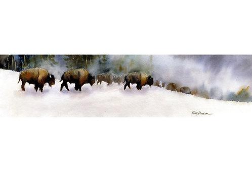 Geyser Buffalo Herd