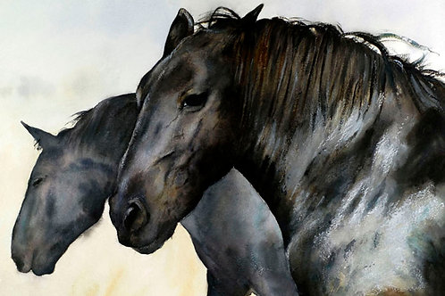 "Percherons 8"" x 10"""