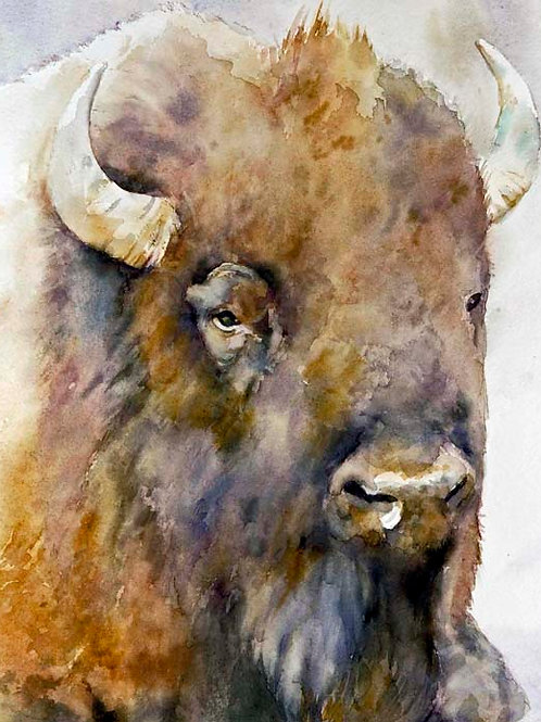 """Buffalo , The wise one   11"""" x 14"""""""