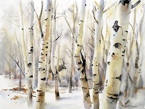 "Through The Aspens  14"" x 11"""