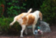 Pet Sitting Dog Walking Jackson, NJ