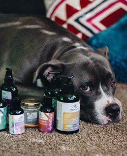 Pet friendly aromatherapy and skincare products