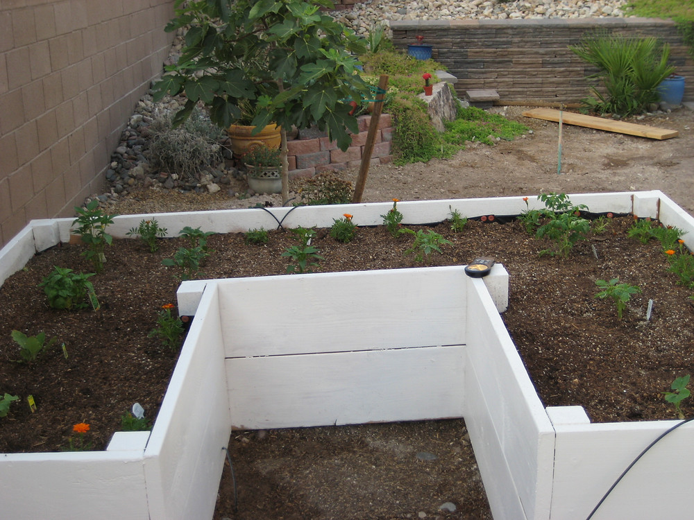 Freshly planted raised beds