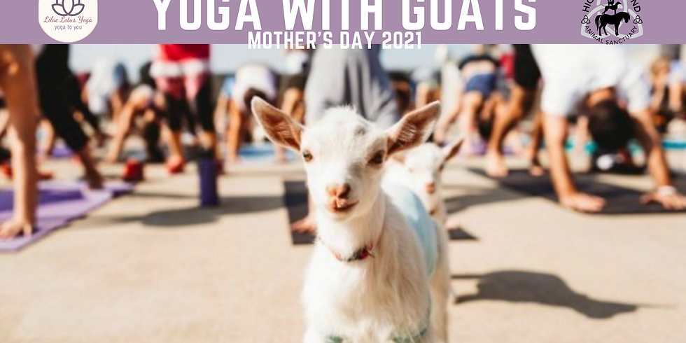 Yoga with Goats! 10-11AM
