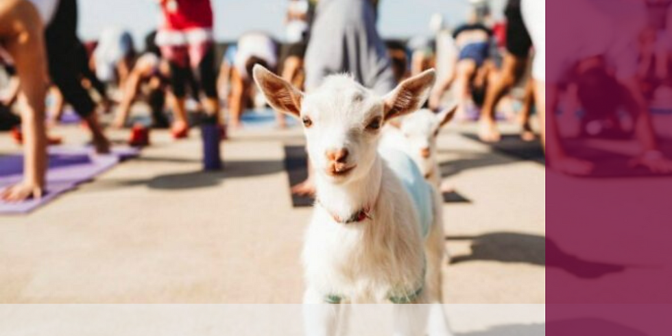 Yoga with Goats! Sat. May 9th 12-1PM