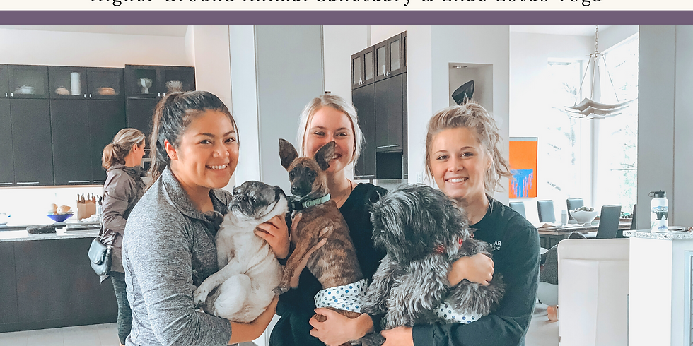 Yoga With Dogs Nov. 14th