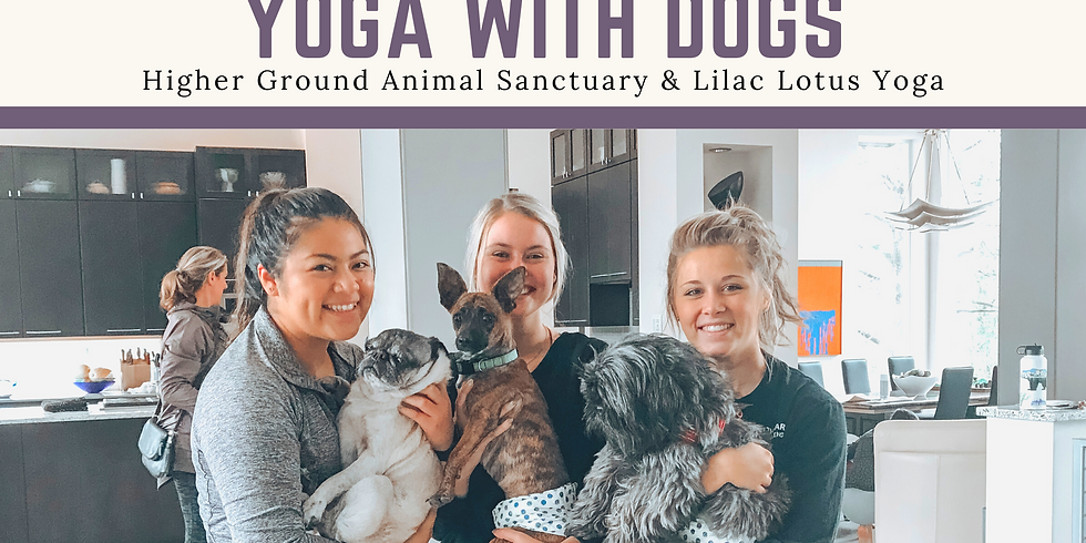 Postponed: Yoga with Dogs!