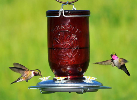 Inner Calm & the Hummingbird Challenge