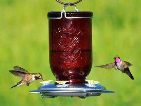 Inner Calm & the Hummingbird Challenge
