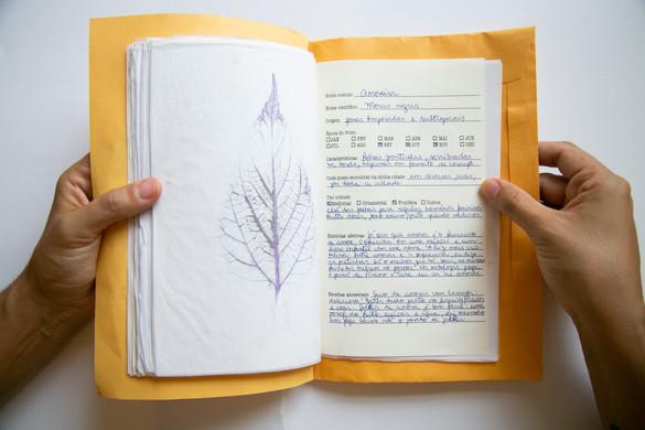 Caderno afetivo7.jpg
