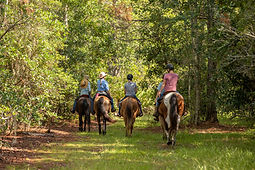 Fast Horse Photography-42.jpg
