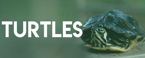 ES banners_TURTLES.jpg