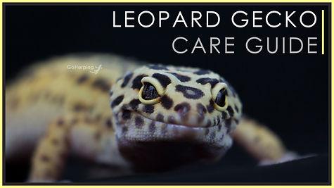 leo care guide.jpg
