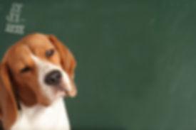 Dog_School(1).jpg