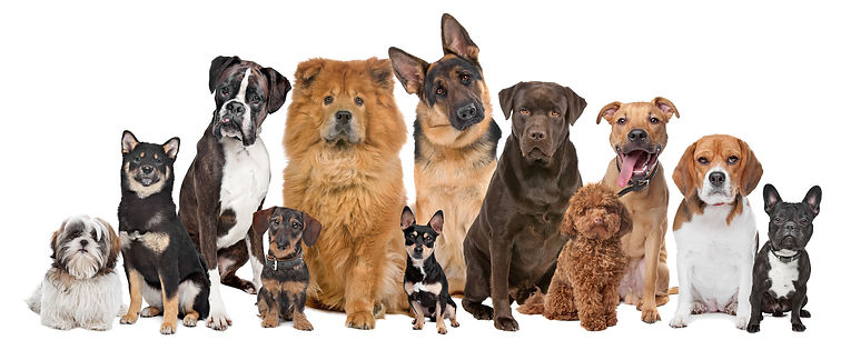 good-breeds-come-in-all-sizes.jpg