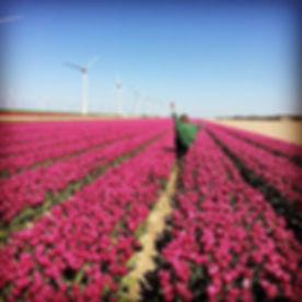 #tulips #tour #colors #flowers.jpg