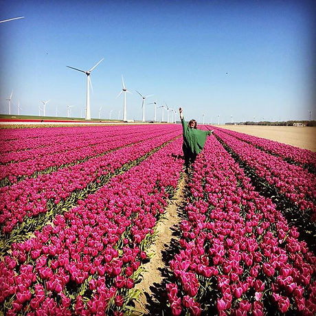 #tulips #tour #colors #flowers.jpg