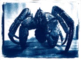 ombilic crabe1.jpg