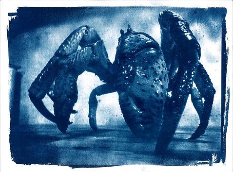 ombilic crabe 2.jpg