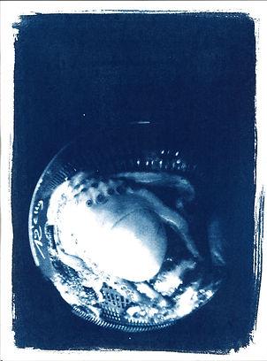 Ombilic globster 1.jpg