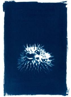 Ombilic piquant (collection particulière)