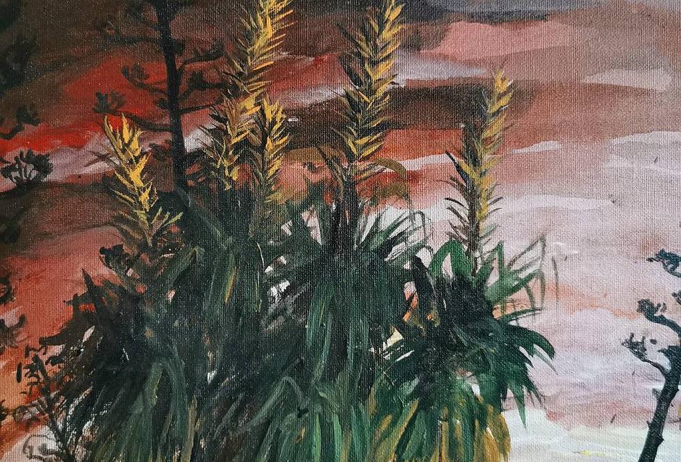 Cactus garden at sunset